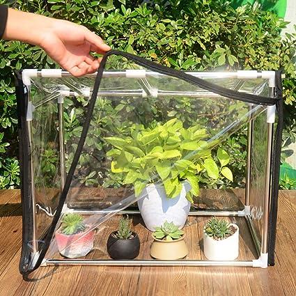 Fabulous Amazon Com Guowei Small Greenhouse For Succulent Plants Interior Design Ideas Philsoteloinfo