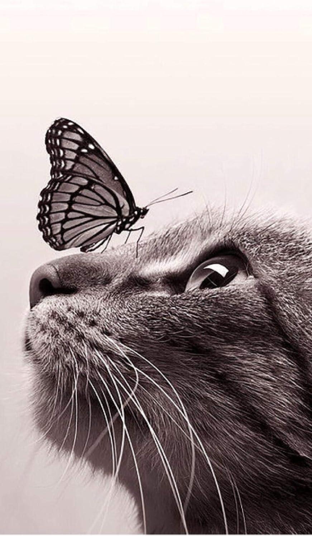 Benjaminze - 1000 piezas Puzzle - Gato blanco y negro con mariposa - Rompecabezas para niños adultos juego creativo rompecabezas Navidad decoración del hogar regalo