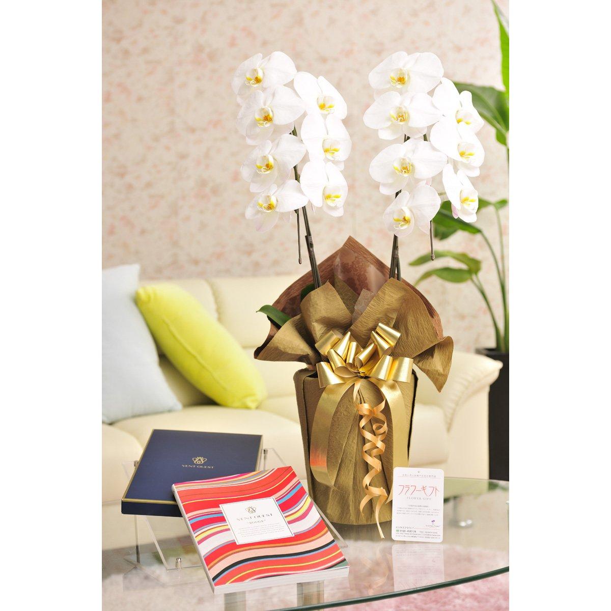 花とギフトのセット 胡蝶蘭 大輪2本立とカタログギフト(ヴァンウェスト/ルージュ) B07DT9J4QH