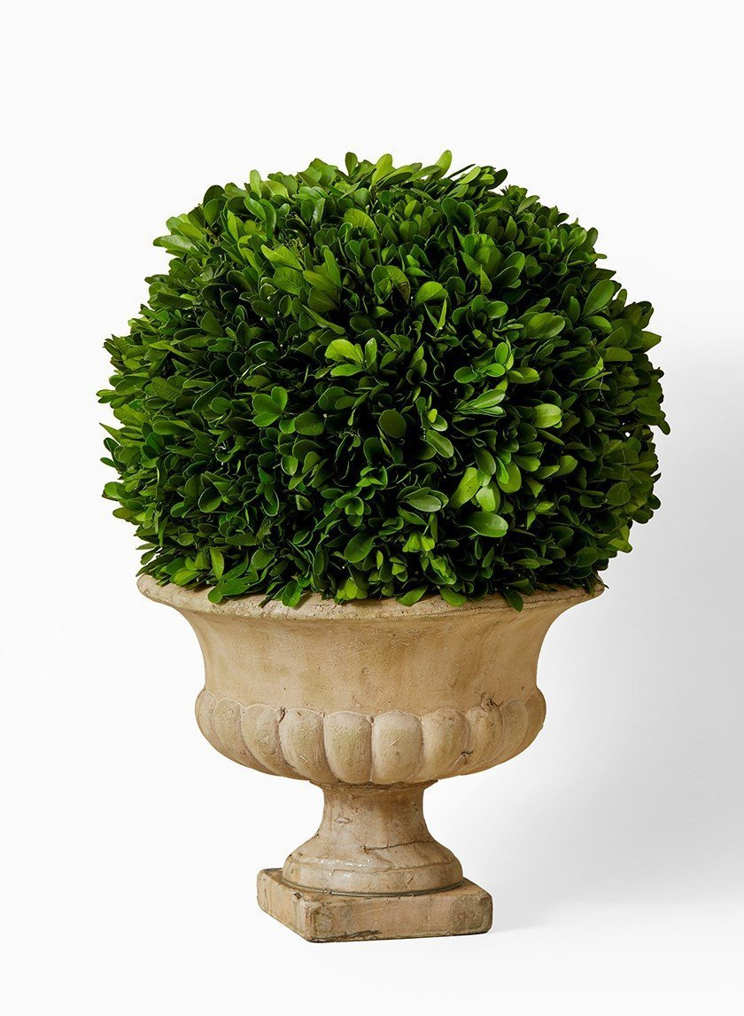 Handcrafted Potted Topiary; Large Preserved Boxwood in Urn Topiary by Pick'nDaisies