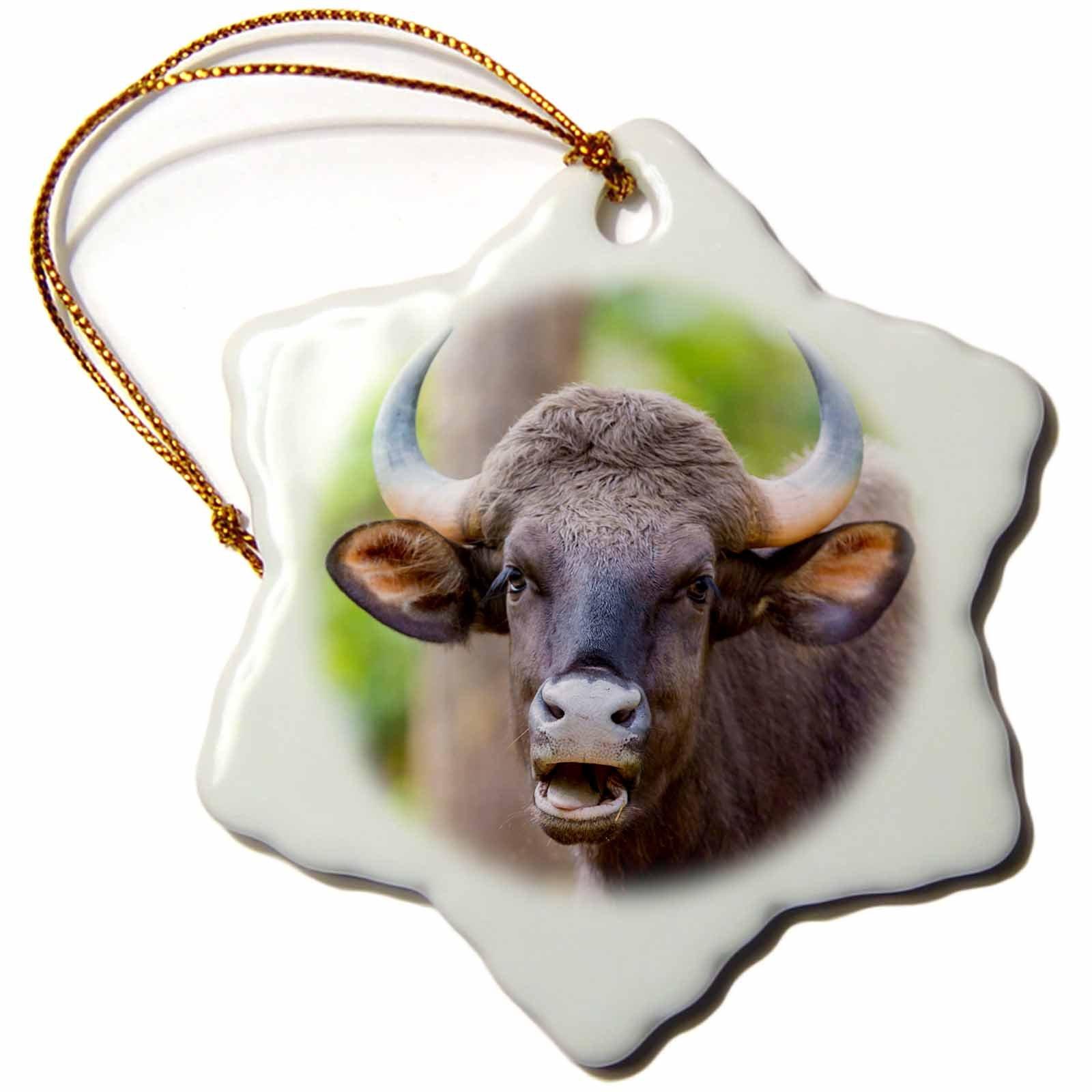 3dRose Danita Delimont - Cattle - India. Gaur, Kanha tiger reserve, Indian wild bison portrait. - 3 inch Snowflake Porcelain Ornament (orn_276818_1)