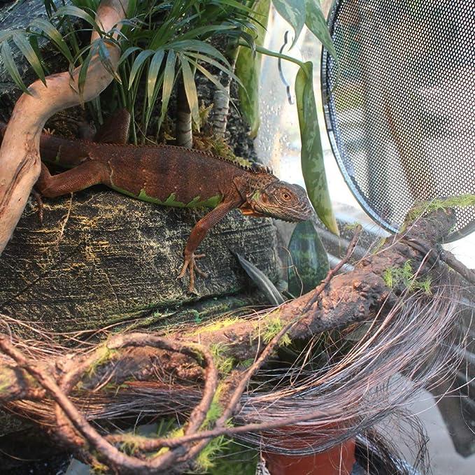 POPETPOP Selva de Escalada Artificial para Reptiles, Vides ...