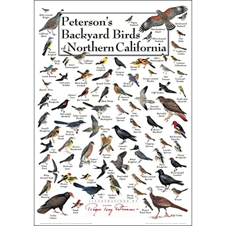 Wonderful Earth Sky + Water Poster   Petersonu0027s Backyard Birds Of Northern California