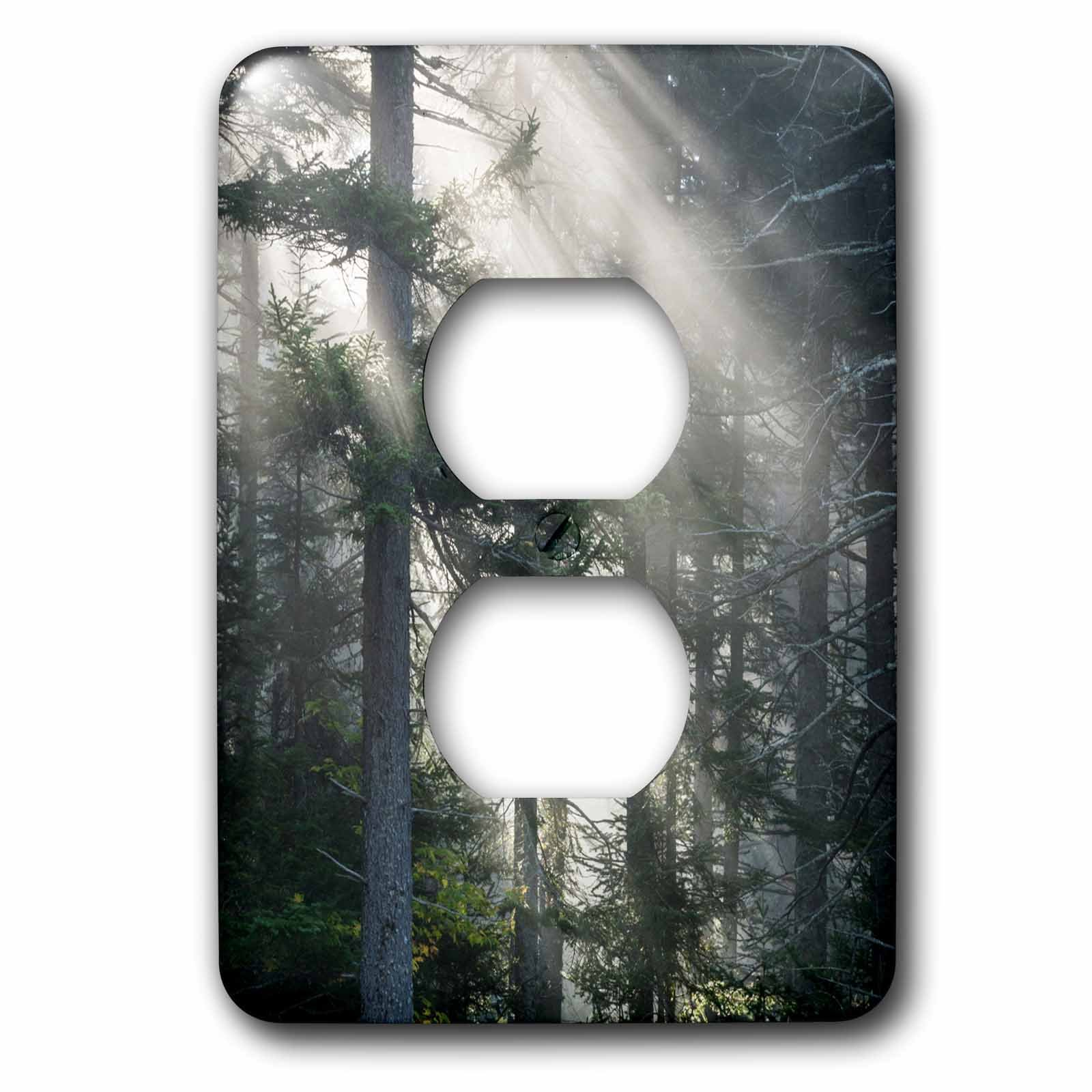 3dRose Danita Delimont - Trees - Usa, New Hampshire, White Mountains. Sun rays through pine trees. - Light Switch Covers - 2 plug outlet cover (lsp_259704_6)