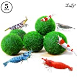 5 LUFFY Shrimp Balls - Instantly Purify Water for Shrimps: Beautiful & Easy Live Plant: Provide micro-nutrients for Shrimps to Feed on