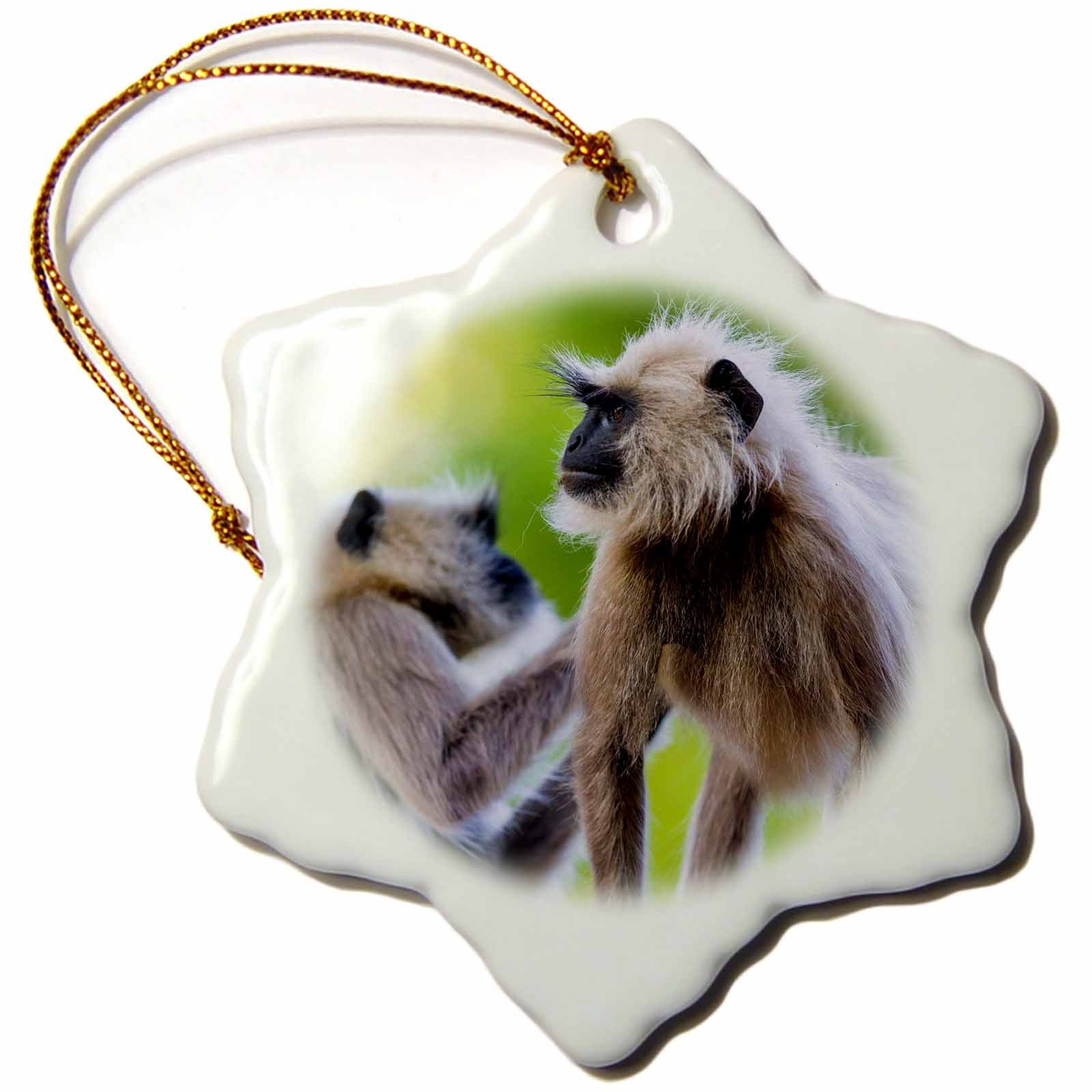 3dRose Danita Delimont - Primates - India. Kanha Tiger Reserve, Hanuman langur grooming eachother. - 3 inch Snowflake Porcelain Ornament (orn_276779_1)