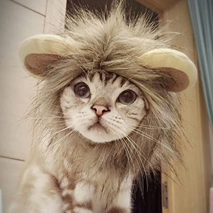 CPPSLEE Lion Mane Wig Costume for Cat (Gray) & Amazon.com : CPPSLEE Lion Mane Wig Costume for Cat (Gray) : Pet Supplies