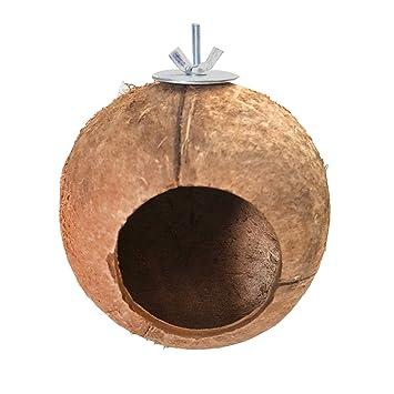 Cáscara de coco natural aves casa pericos loros pinzones gorrión ...