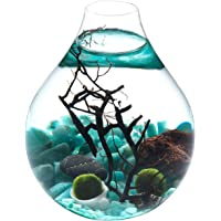 Fashion Table Aquarium - Live Moss Ball, Sea Fan, Amazonite Gravels, Seashell, Red Volcano Rock, Work Desk Decoration Indoor Decor