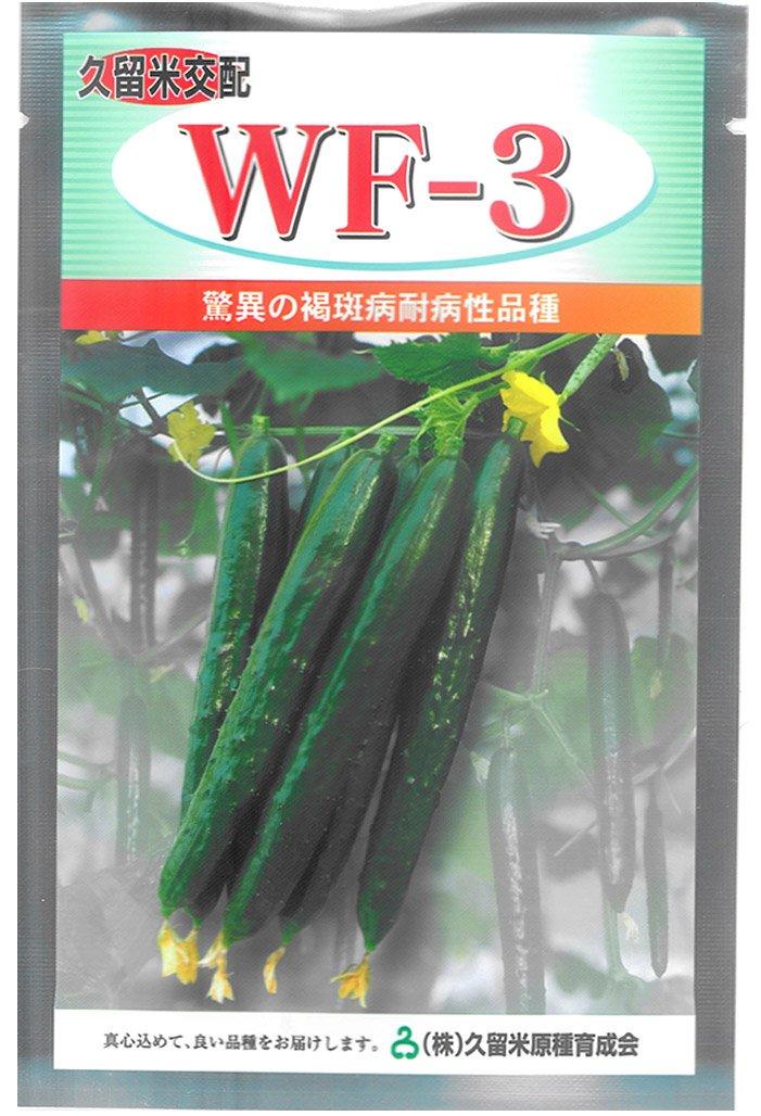 久育種苗 WF-3 (きゅうり) 350粒詰 [久留米原種育成会] B014H0HVKA