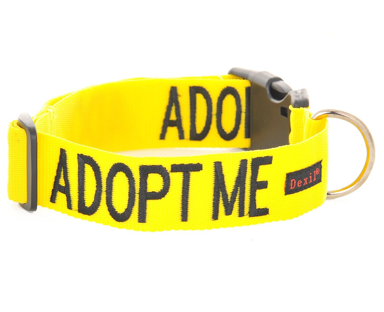 """Collar para perro con texto """"Adopt Me"""", color amarillo, en tallas S-M y L-XL, con codificación por colores para evitar accidentes por advertencia a otros de tu perro de antemano Friendly Dog Collars FDC-AMCS1"""