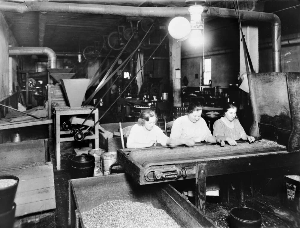 Food & Nut Company C1921 Nthree Women At Work Sorting Nuts On A Conveyor Belt At The Vegetarian Food And Nut Company On South Capitol Street In Washington DC Photograph C1921 Poster Print by (18 x 24