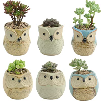 Ogrmar 6Pack Owl Plant Window Boxes Cute Owl Flower Pot/Modern Ceramic Succulent Planter Pots/Tiny Flower Plant Containers Animal Decor (Owl Flower Pot 1) : Garden & Outdoor