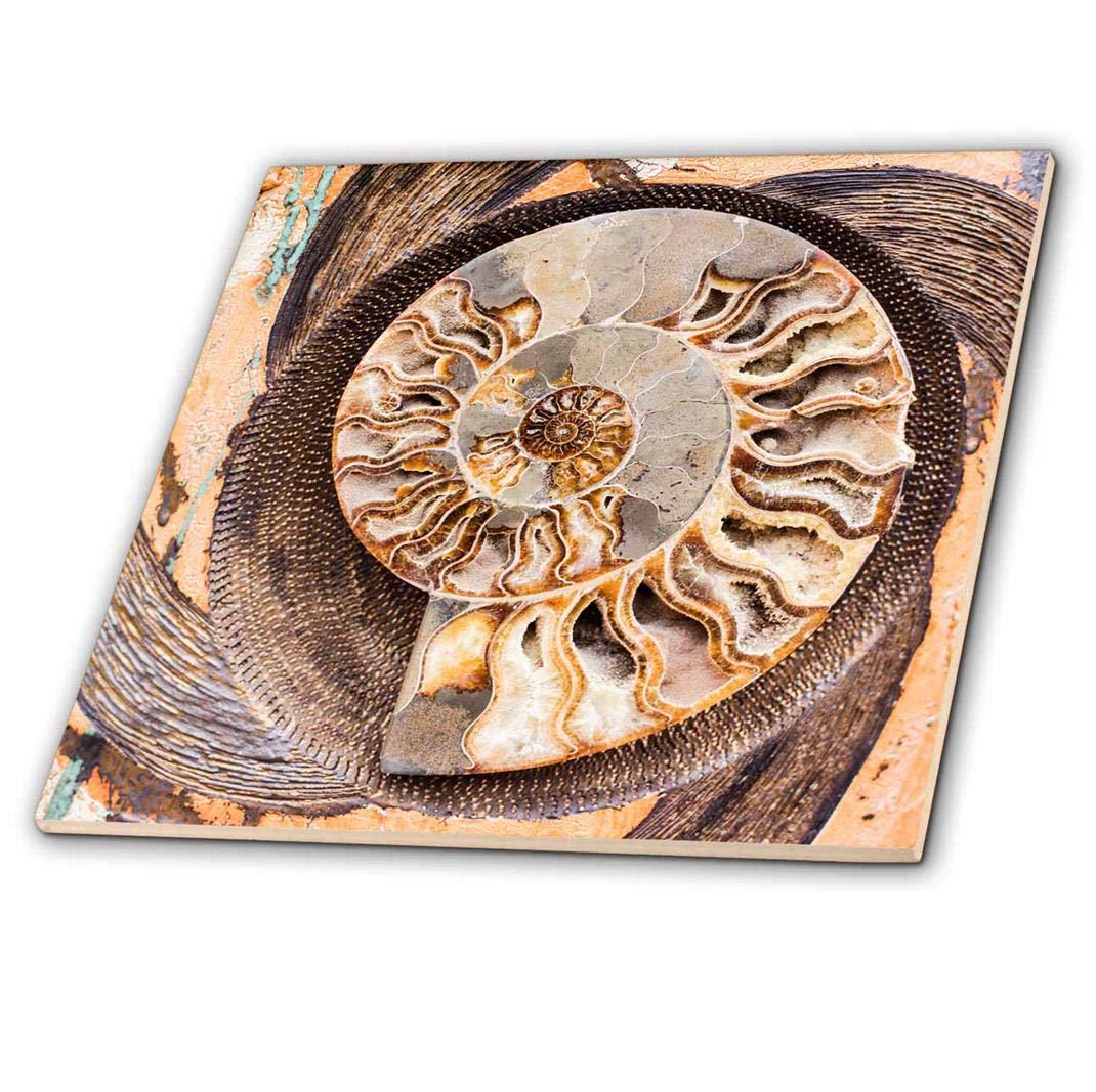 Multicolor 3dRose fossilized Shell Cut in Half ct/_208255/_2 USA 6-inch New Mexico -Ceramic Tile Santa Fe