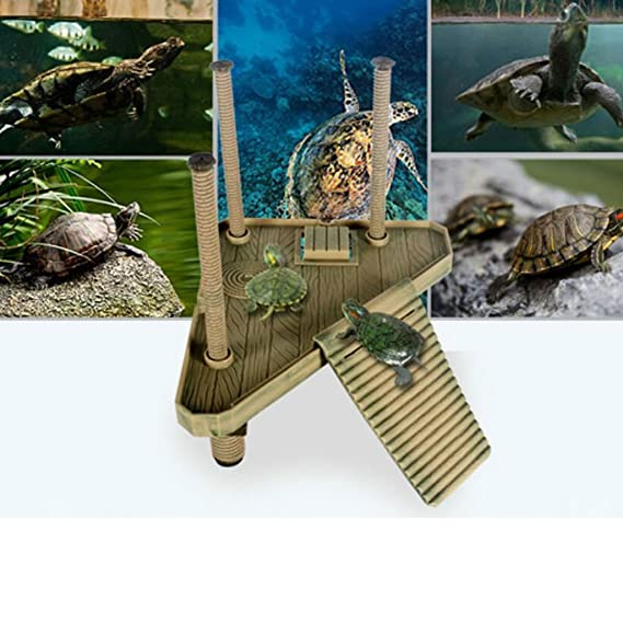Parque de Atracciones Plataforma Muelle de Tortuga Reptil Con Rampa de Escalera Toma Sol: Amazon.es: Hogar