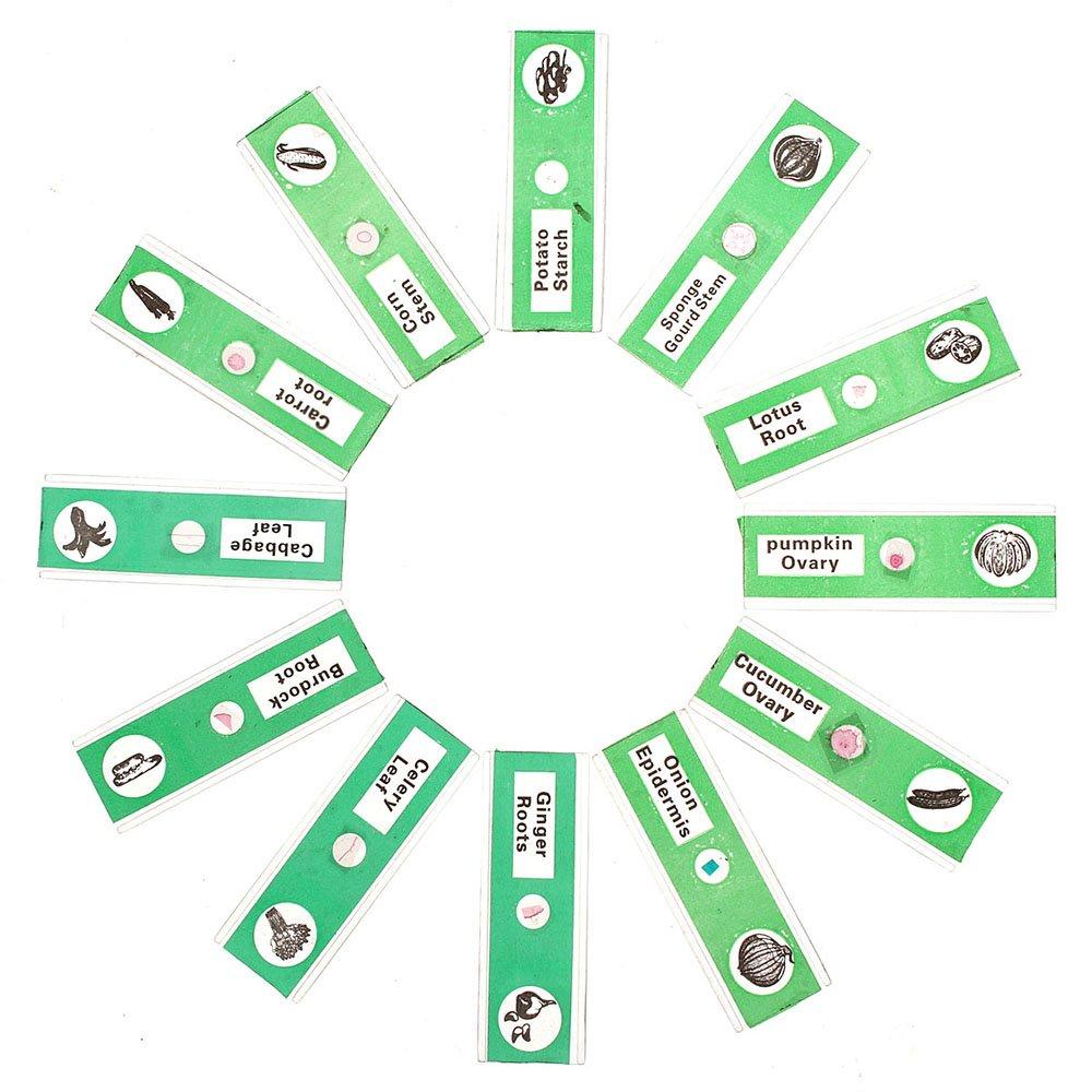 WhizKidsLab 48 Plastic Prepared Microscope Slides Kit Bonus Butterfly Specimen for Kids Student Science STEM Education