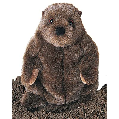 Douglas Chuckwood Groundhog Plush Stuffed Animal: Toys & Games