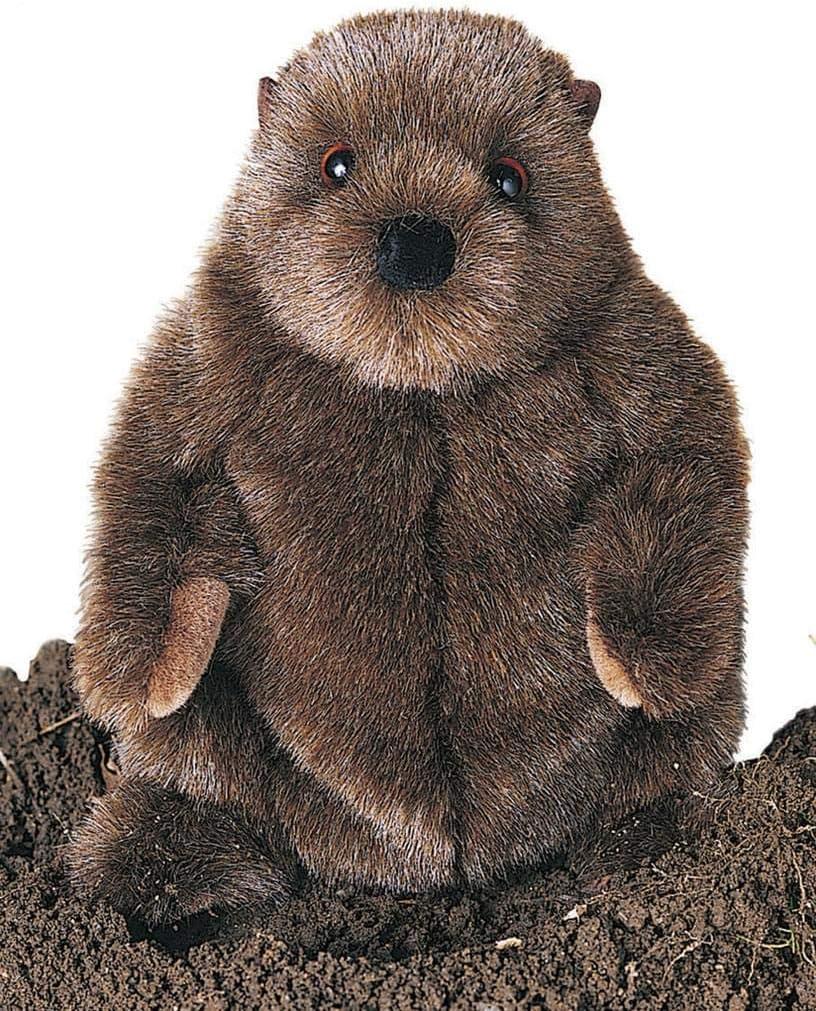 B000BDNBZC Douglas Chuckwood Groundhog Plush Stuffed Animal 71L2um2D1kL