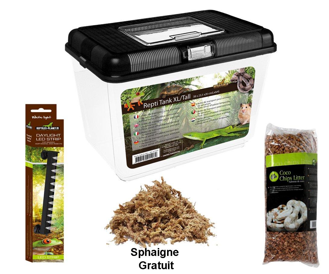 Reptiles Planet Kit avec Terrarium Insecte en Plastique pour Phasme 38 x 23, 5 x 26 cm Taille XL/Tall 895262