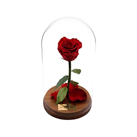 Boutique Market Beauty And The Beast Rose Live Forever Rose In