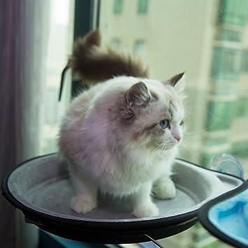Amazon.com: D.Jane - Hamaca para ventana de gato con ventosa ...