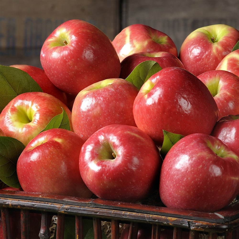 The Fruit Company Pink Lady Apples - 4 lbs - 6 Premium Fresh Pacific Northwest Pink Lady Apples in a Reusable Beautiful Watercolor Box Designed By Local Oregon Artist