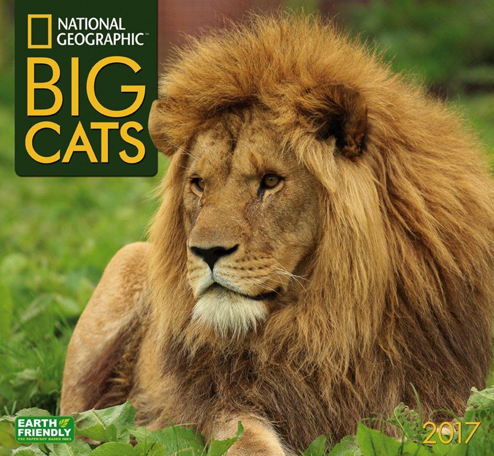 National Geographic Big Cats 2017 Wall Calendar pdf