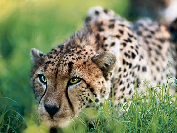 Safari in deutschland hotspots um tiere in freier natur zu