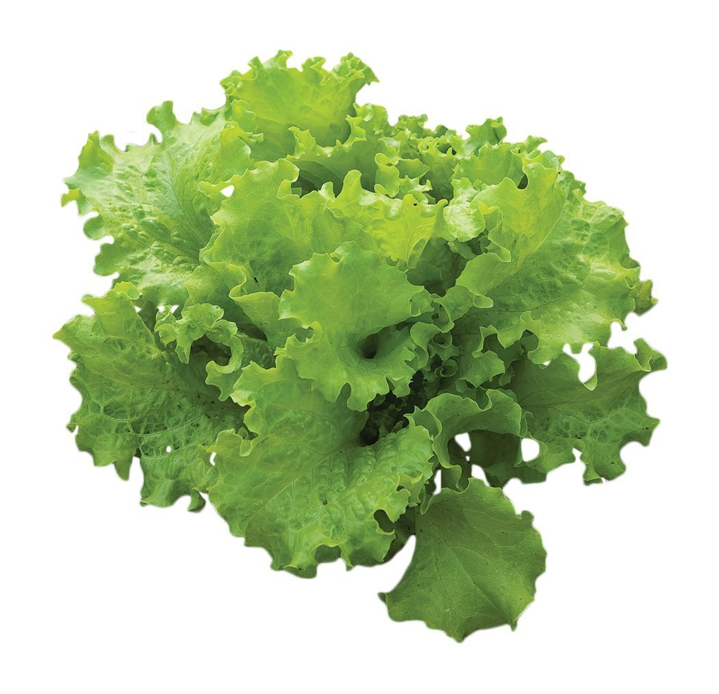 Creamed lettuce seed eaten super soft Balcony vegetables Potted vegetables Simple planting 500 grains/bag Xutong