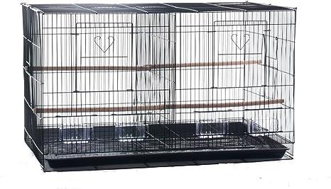 Amazon.com: Finch Parakeet Cockatiel Canarias Criador ...