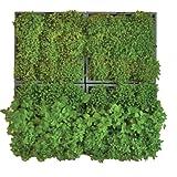 wandbegr nung karoo f r 9 pflanzen 40 x 40 in grau. Black Bedroom Furniture Sets. Home Design Ideas