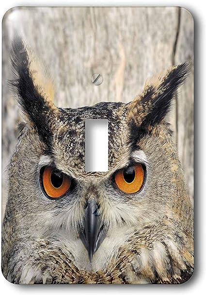 3drose Llc Lsp 9902 1 Eagle Owl Bubo Bubo Single Toggle Switch Switch Plates