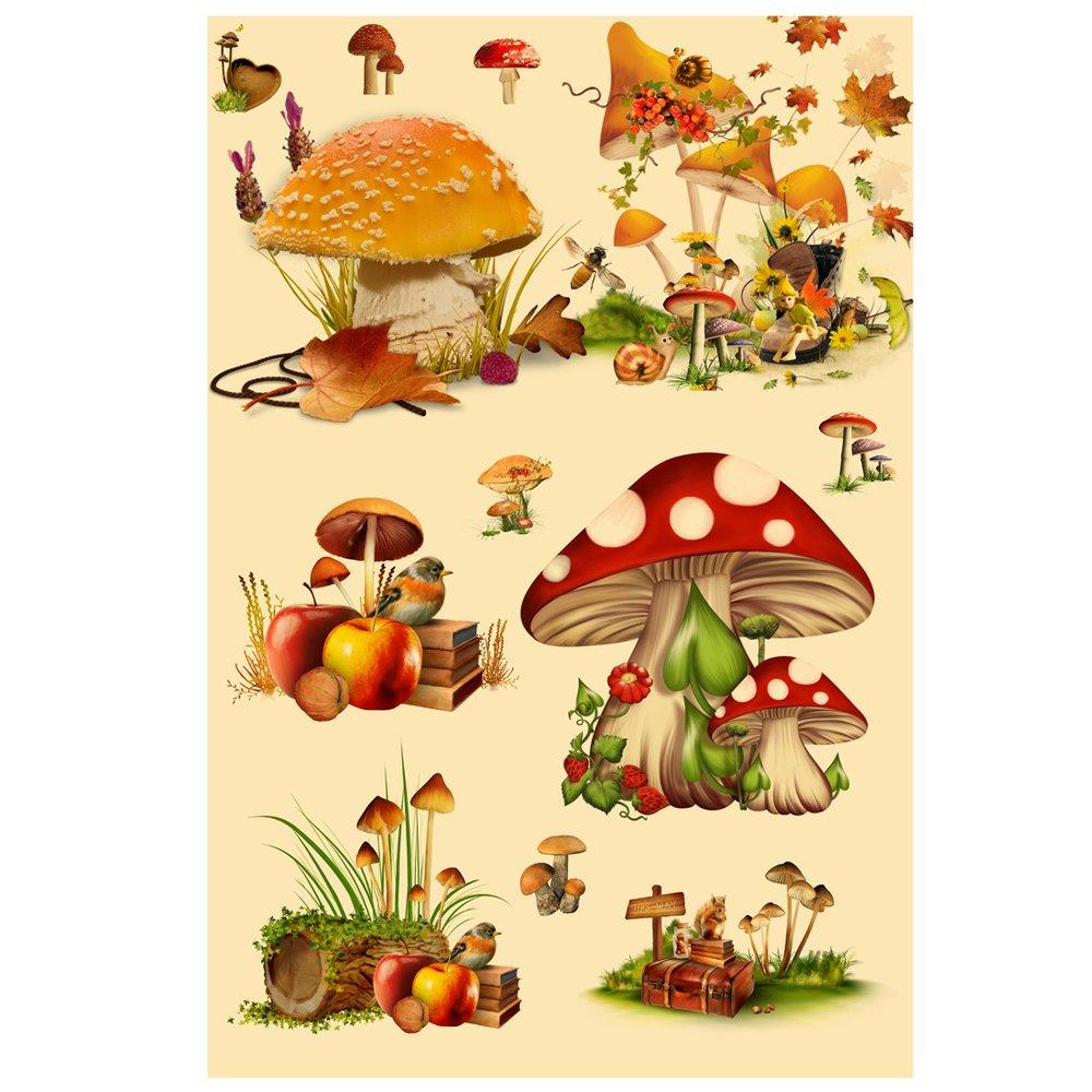 vintage poster print art botanical mushrooms diagram chart champignons  identification reference15 75'' x 23 62'': amazon ca: home & kitchen