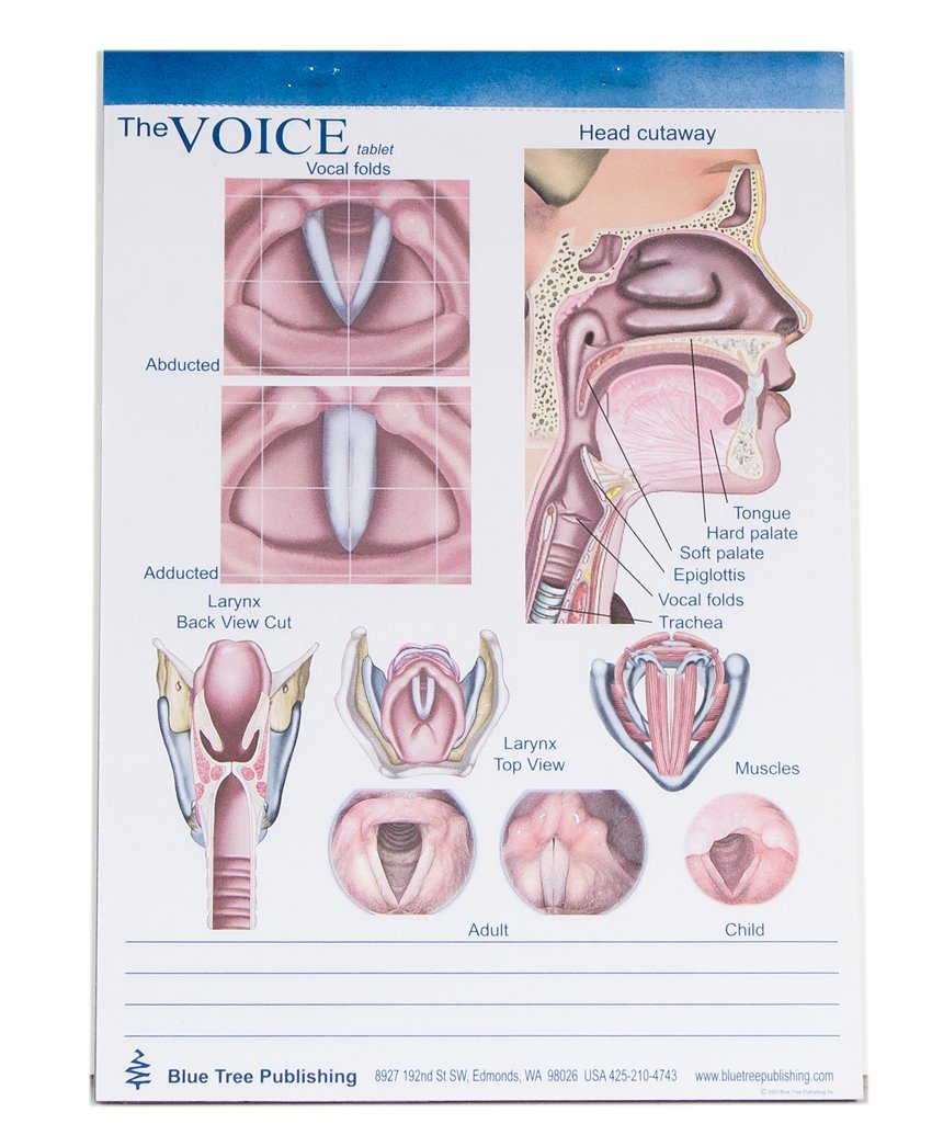 Voice and larynx Tablet-50 Sheets Per Tablet-1 Tablets Per Package-8 ...