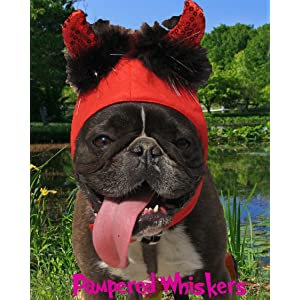 Pampered Whiskers Little Devil costume hat for cats and dogs