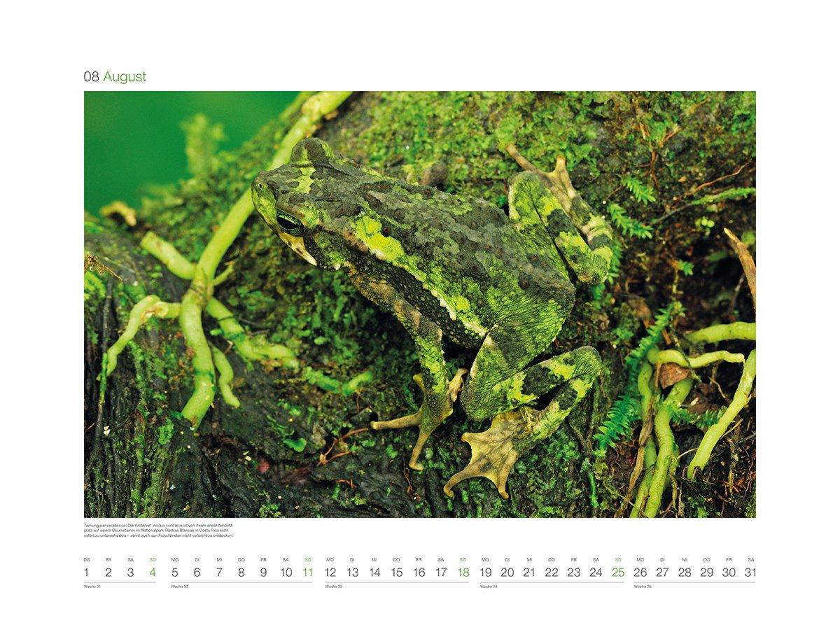 Green 2019: Wandkalender: Amazon.es: KUNTH Verlag: Libros en ...