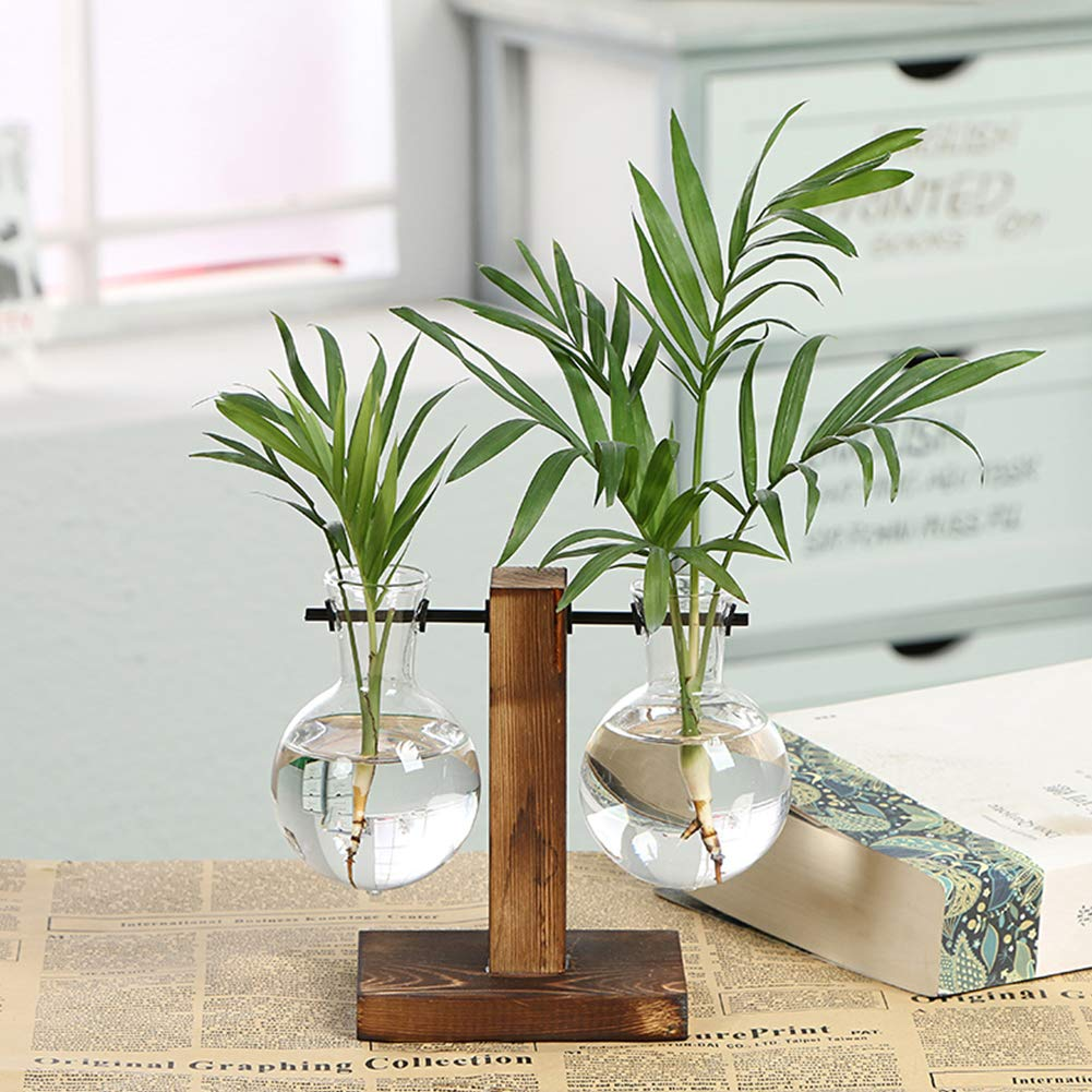 Amazon.com & Amazon.com : Loghot Glass Hanging Plant Terrarium Creative ...