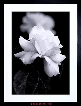 Amazon com photo nature black white rose petal flower framed print f12x4204 posters prints