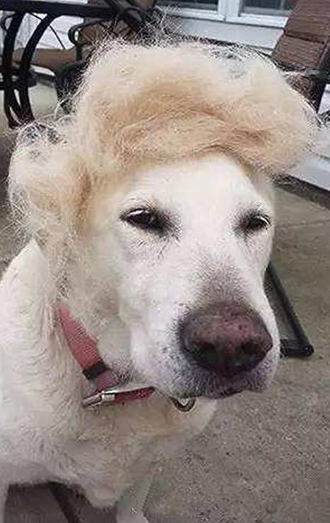 Peluca de perro estilo Trump, disfraz de perro donald gato cabeza desgaste ropa juguete para