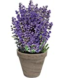 Scents of Fresh Lavender | Grow Your Own Lavender From Seed | Great Mother's Day Gift | Exclusively By TotalGreen Holland
