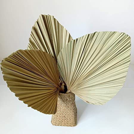 Amazon Com Ghy Decor Natural Spear Cut Palm Bunch Dried Palm Leaves Fan Preserved Leaves Palm Tree Style A 3 Pieces Home Kitchen