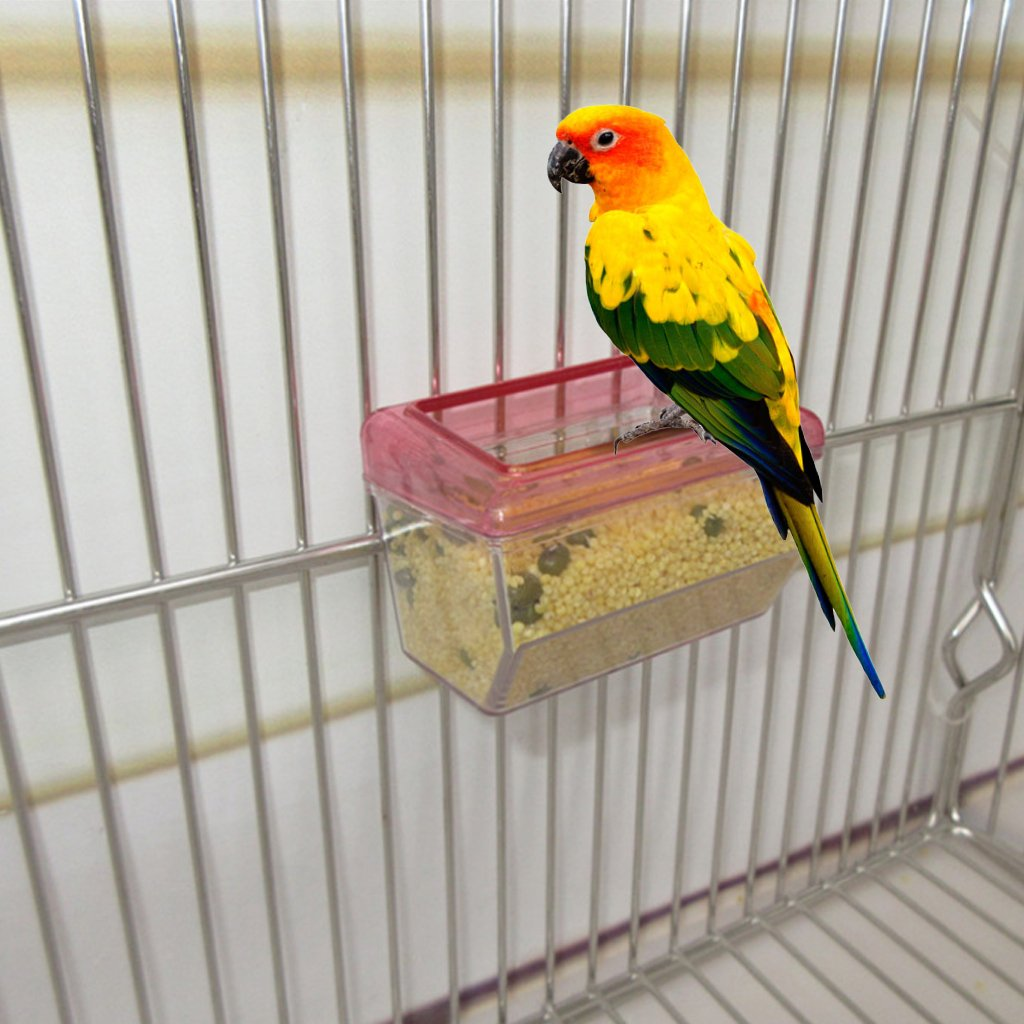 Tandou - Comedero para pájaros (acrílico, Transparente ...