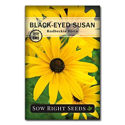 Sow Right Seeds - Black Eyed Susan Flower Seeds for Planting, Beautiful Flowers to Plant in Your Garden; Non-GMO Heirloom Seeds; Wonderful Gardening Gifts (1) : Garden & Outdoor