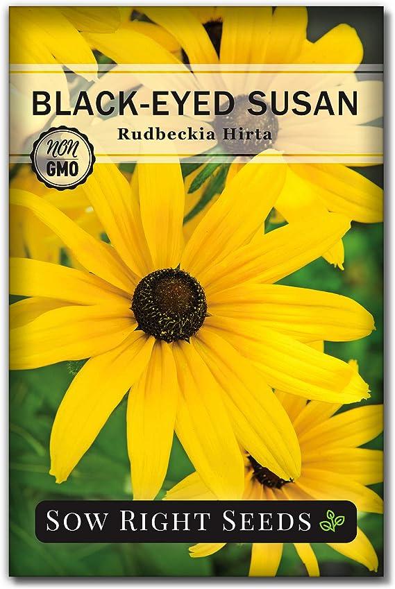 When do black-eyed Susans bloom - Non GMO seeds