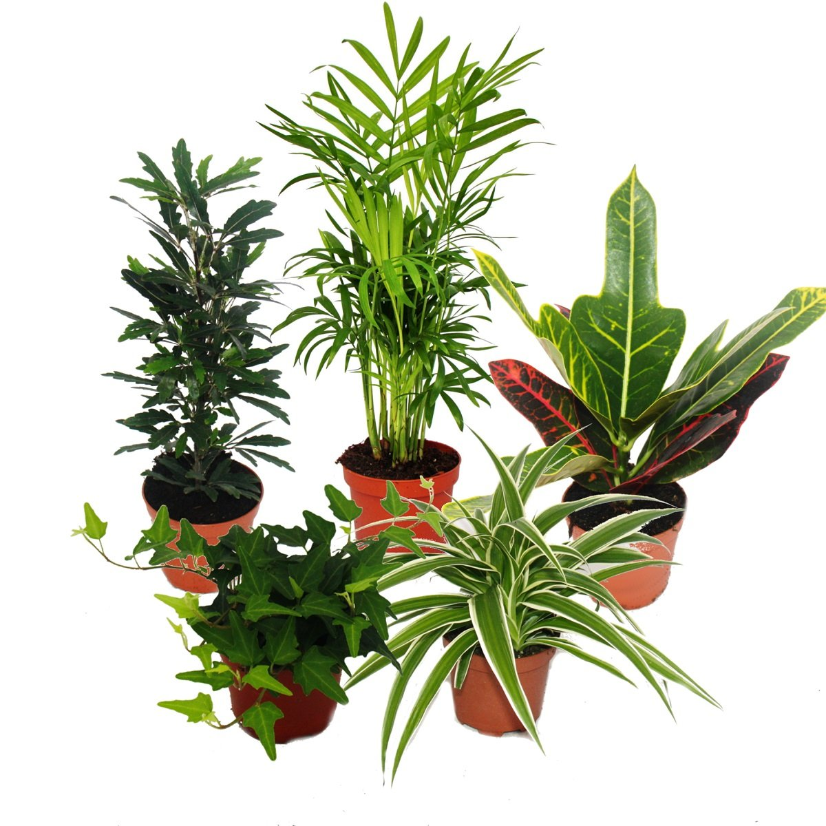 Mini Indoor Plant Mix - Set of 5 plants - 9cm pot Exotenherz