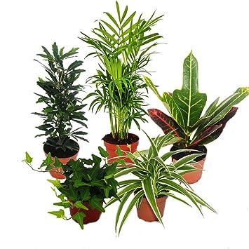 Etwas Neues genug Großes Zimmerpflanzen Set mit 5 Pflanzen - 9cm: Amazon.de: Garten #EU_42