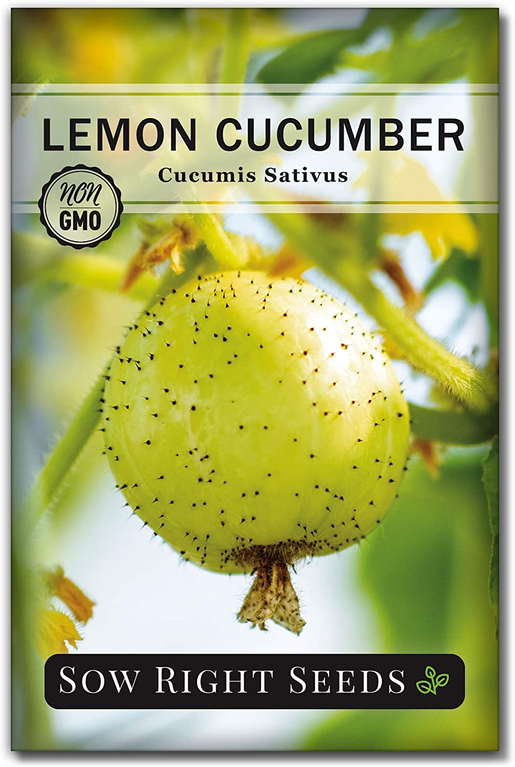 Sow Right Seeds - Lemon Cucumber Seeds for Planting - Non-GMO Heirloom Seeds with Instructions to Plant and Grow a Home Vegetable Garden, Great Gardening Gift (1)