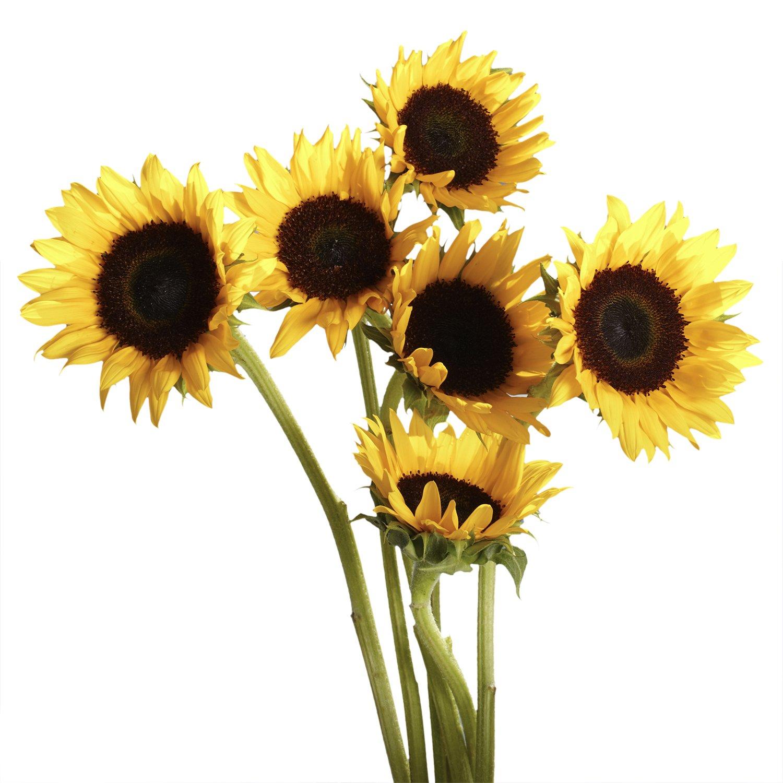 Amazon Globalrose 100 Fresh Cut Yellow Sunflowers Fresh