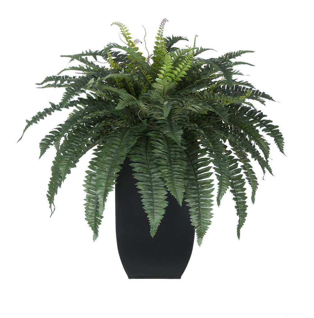 Artificial Fern in Tapered Zinc Planter (Matte Black)