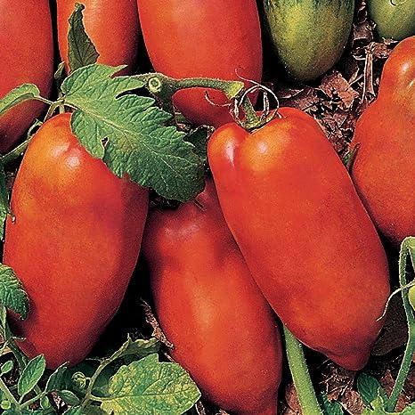 Roma Type Tomato Sauce Polish Paste Tomato Seeds FREE SHIPPING NON-GMO